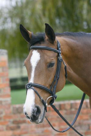 Nadder Valley Equine Equestrian Equipment And Supplies